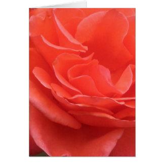 Tides of Peach Rose Card