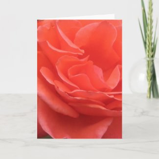 Tides of Peach Rose Flower Photo Greeting Card