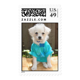 Tie-Dyed Puppy Postage Stamps