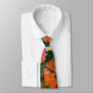 Tie For Fall Oak Maple Leaves Print