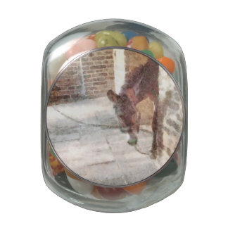 Tied donkey in brick structure jelly belly candy jars