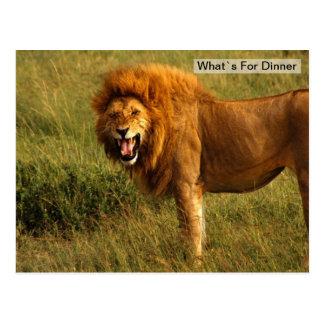 Tiempo de cena del león tarjeta postal