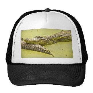 Tiempo de la siesta del cocodrilo en lenteja de ag gorros bordados
