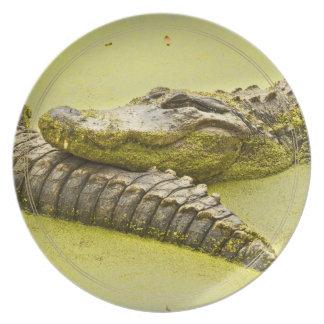 Tiempo de la siesta del cocodrilo en lenteja de platos