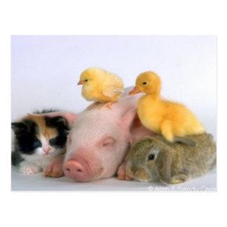 Tiempo de la siesta para los animales tarjetas postales