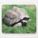 Tiempo de la tortuga tapetes de raton
