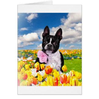 Tiempo de primavera de Boston Tarjeta De Felicitación