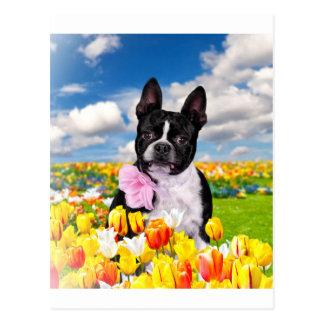 Tiempo de primavera de Boston Tarjeta Postal