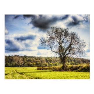 Tiempo de primavera en el campo tarjetas postales
