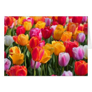 Tiempo de primavera en el Gardens1 hundido 2013 Tarjeta Pequeña