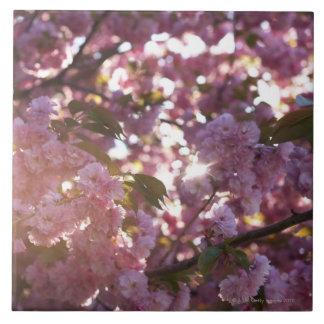 tiempo de primavera en el parque Brooklyn NY de la Azulejo Cuadrado Grande