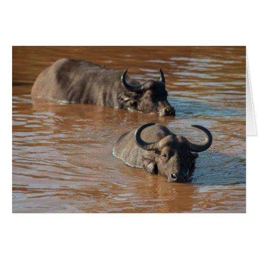 Tiempo del baño para la tarjeta de los búfalos