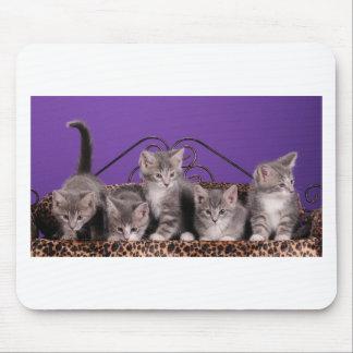 Tiempo del gatito alfombrillas de ratón