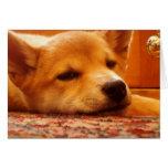 Tiempo del perrito de Shiba Inu hacia fuera Tarjetón