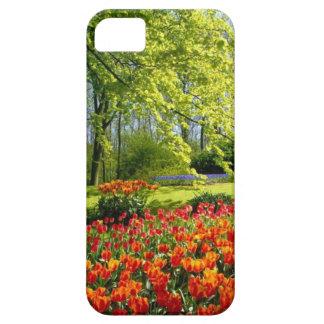 Tiempo del tulipán, jardines en Keukenhof Funda Para iPhone SE/5/5s