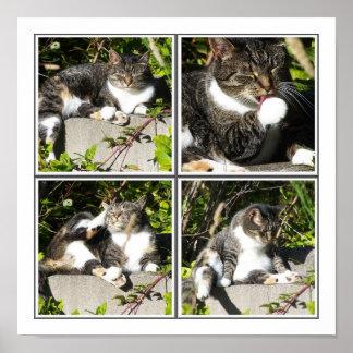 Tiempo libre de una impresión del collage del gato