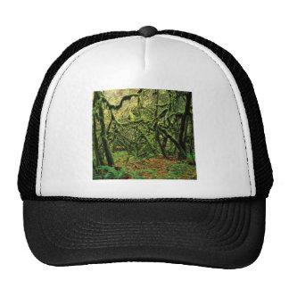 Tiempos cubiertos de musgo de los árboles de la na gorra
