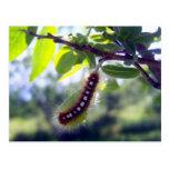 Tienda Caterpillar de bosque 1 postal