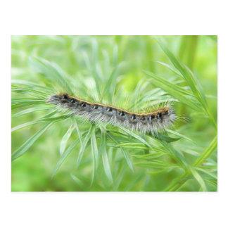Tienda Caterpillar del este Tarjeta Postal