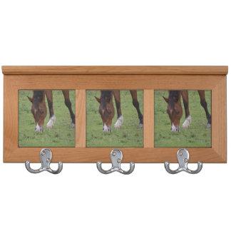 tierra de pasto marrón del caballo equine.JPG