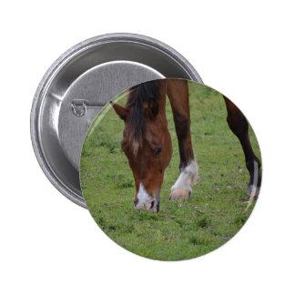 tierra de pasto marrón del caballo equine.JPG Pin Redondo 5 Cm