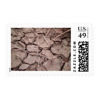 tierra del suelo seco de la grieta