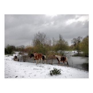 Tierra ideal del invierno postal