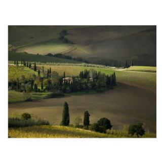 Tierras de labrantío alrededor de Montepulciano, T Postal