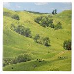Tierras de labrantío cerca de Gisborne, Nueva Zela Teja