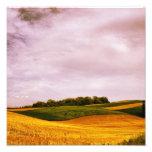Tierras de labrantío de oro impresiones fotograficas