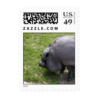 Tierras de labrantío guarras gordas dulces del   sellos postales