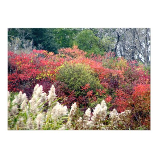 Tifft Nature Preserve - Fall Foliage Announcement