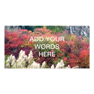 Tifft Nature Preserve - Fall Foliage Photo Cards