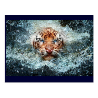 Tigar Swiming Postcard