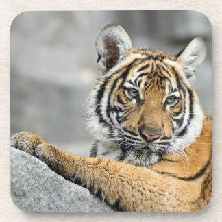Tiger016 Drink Coaster