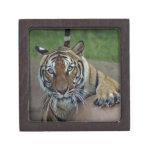 tiger14-10x10 cajas de recuerdo de calidad