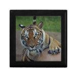 tiger14-10x10 cajas de regalo