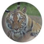 tiger14-10x10 plate
