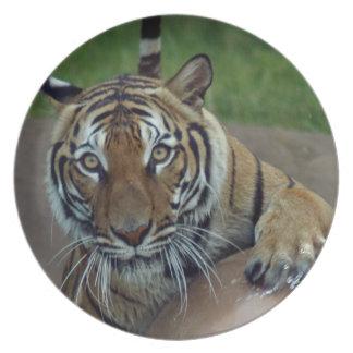 tiger14-10x10 platos de comidas