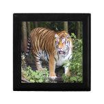 tiger2-10x10 cajas de recuerdo