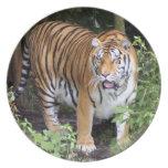 tiger2-10x10 plato de cena
