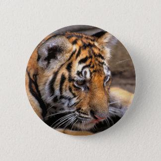 Tiger38 Button