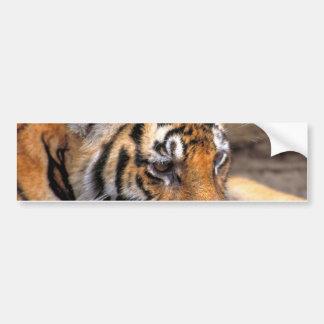 Tiger38 Pegatina Para Auto