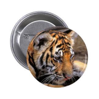 Tiger38 Pin