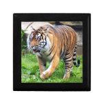tiger4-10x10 caja de joyas
