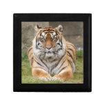 tiger6-10x10 caja de joyas