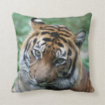 Tiger 013 pillows
