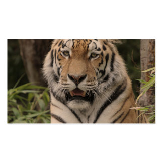 Tiger 0215 Double-Sided standard business cards (Pack of 100)