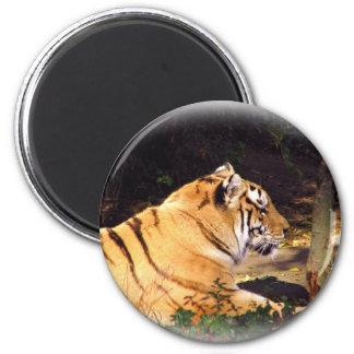 Tiger_1001 2 Inch Round Magnet