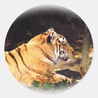 Tiger_1001 Classic Round Sticker